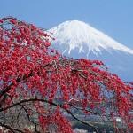 Du học Nhật Bản - Chất lượng ở đâu?